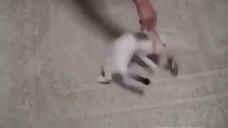 Igra s kotikom