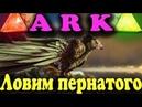 Ловим Аргентависа ARK Survival Evolved Величайшая птица