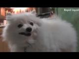 Walk it like I Bork it (VHS Video)