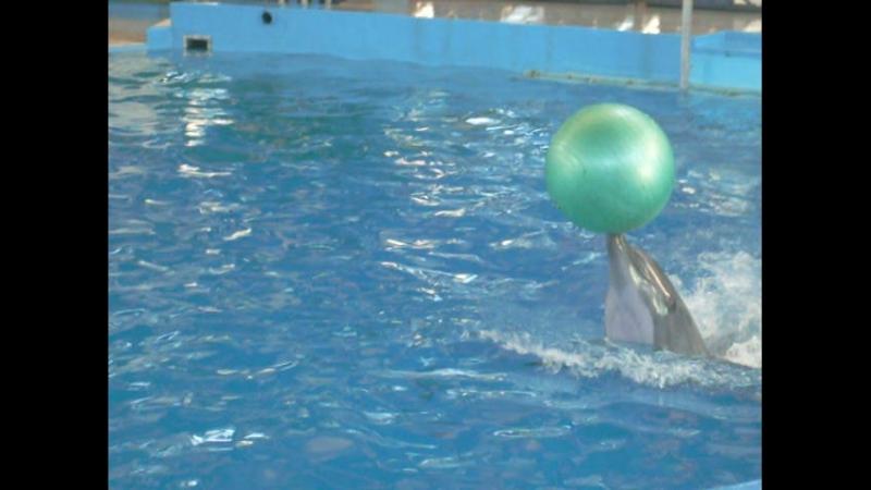 Дельфинарий в Сочи 2 видео
