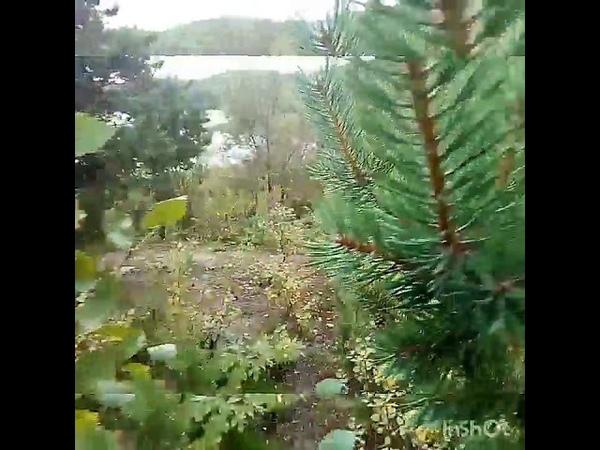 Чистка биополя на природе при взаимодействии с хвойными растениями и природной водой.