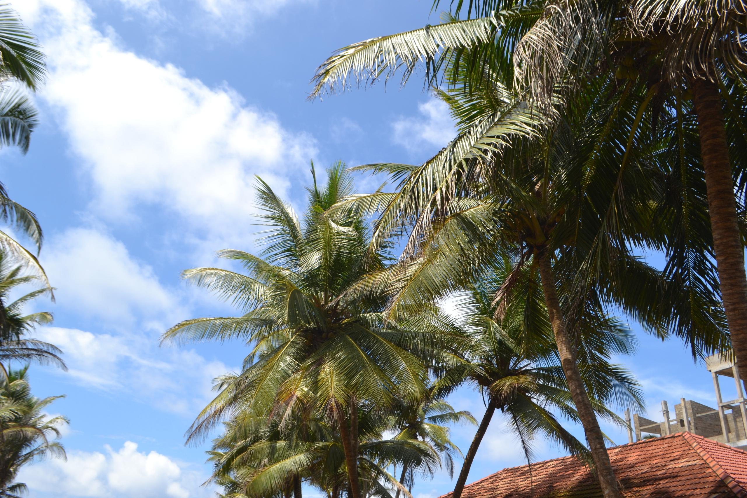 Шри Ланка (фото) Ohy1K5YMY-0