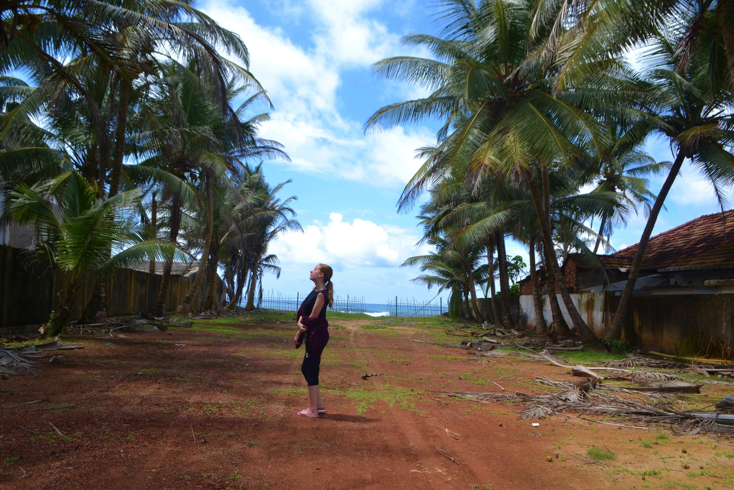 Шри Ланка (фото) L9FOUhQi63o