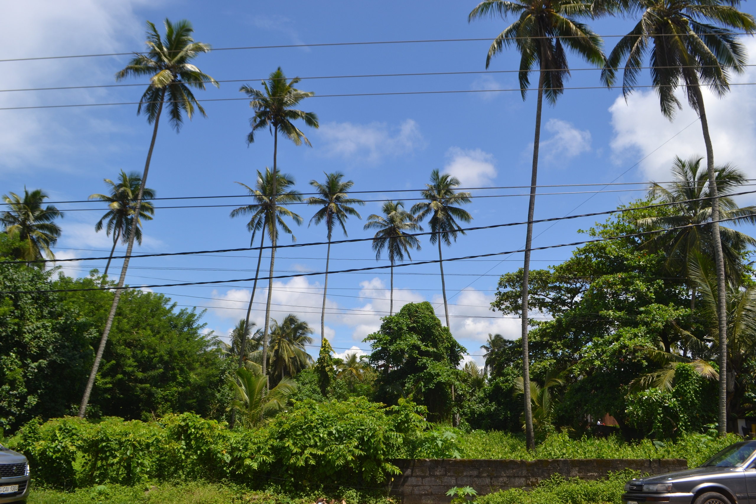 Шри Ланка (фото) SwK19j5MwVQ