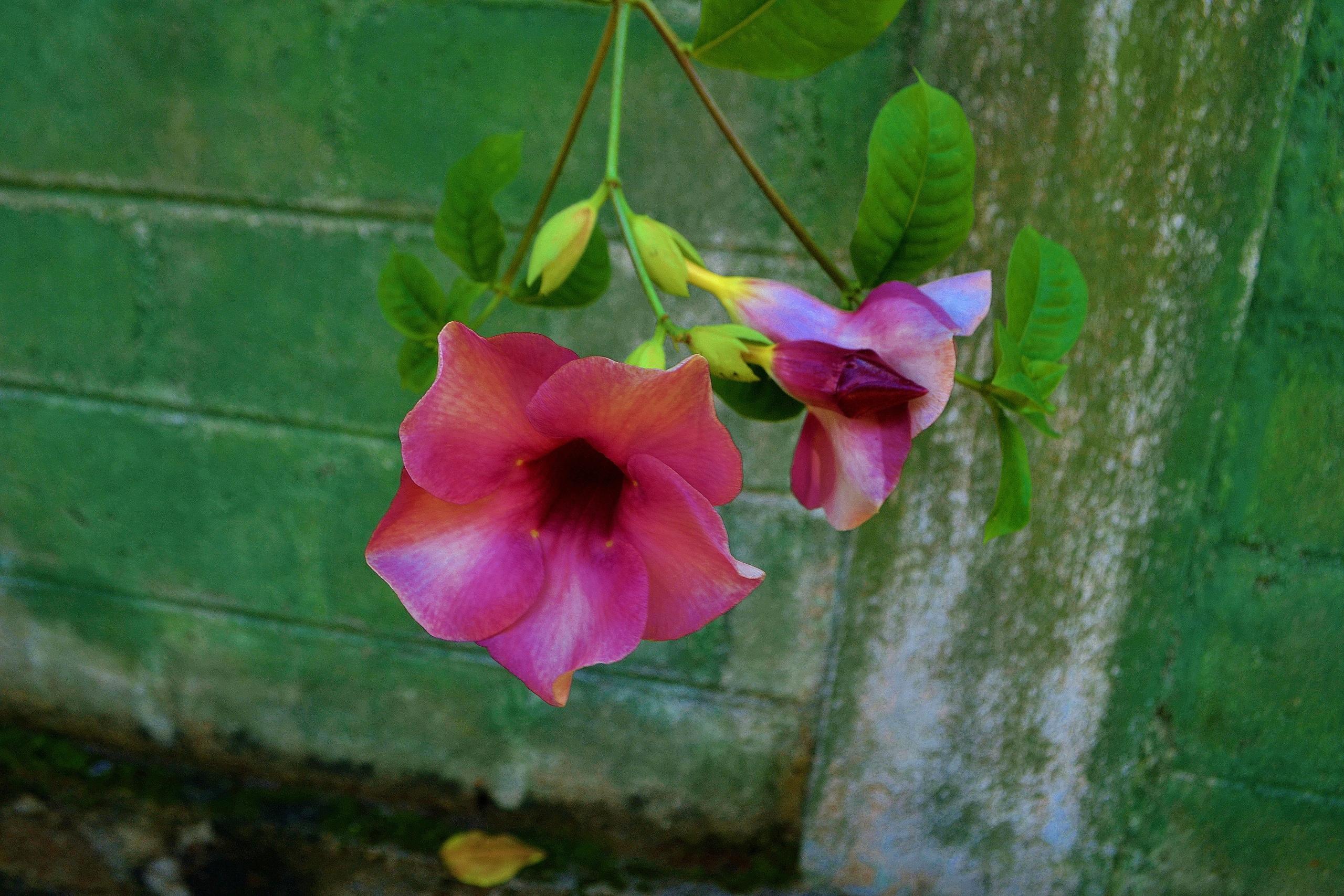 Шри Ланка (фото) - Страница 2 16BfQrnq_Xc