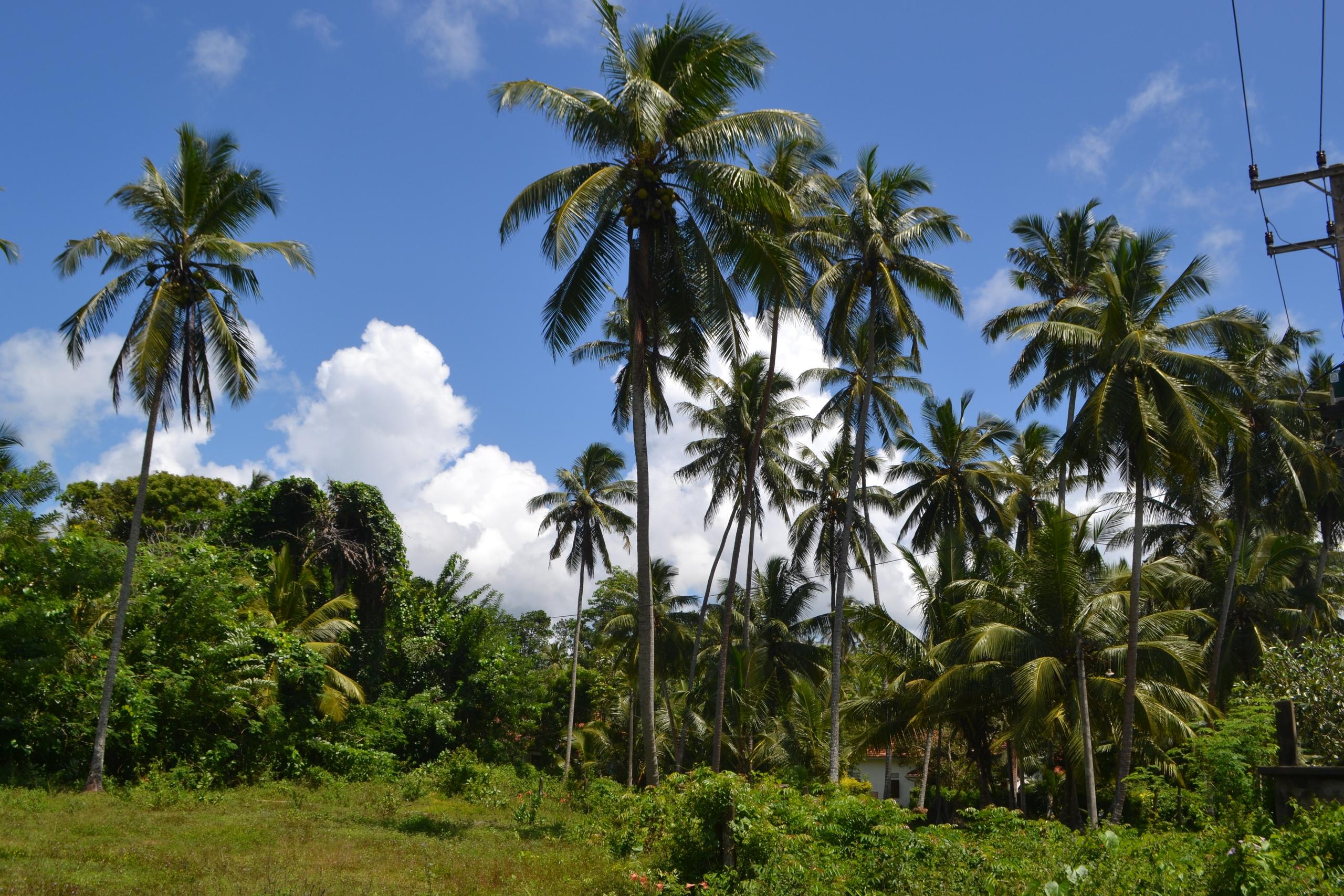 Шри Ланка (фото) - Страница 2 JUwgfuE7AuI