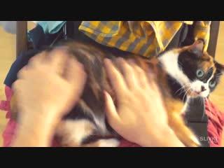 СЛИВКИ ШОУ И КУКИ - БОРЬБА ПРОТИВ РЖАВЧИНЫ (Новое видео Ютуб)