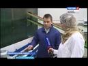 ГТРК СЛАВИЯ Хвойнинский район Биофабрика иван чай 23 11 18
