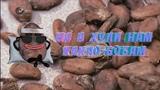 Важные какао-бобы