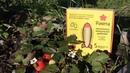 Самый легкий способ удобрить плодовое дерево или кустарник. Удобрение в колышках Ракета.