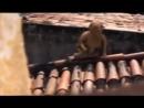 Video_2018-07-31_Черти заснятые на камеру мистические видео сьемки случайные кадры черта