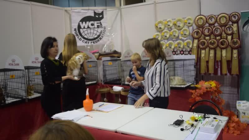 WCF - ринг молодых животных