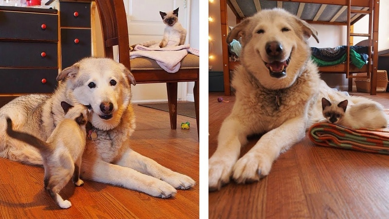 4 Foster Kittens Bring Smile Back to Lonely Dog