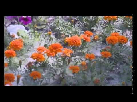 Пух в Тюмени, словно снег зимой