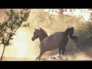 Most beautiful horse film ever - YouTube