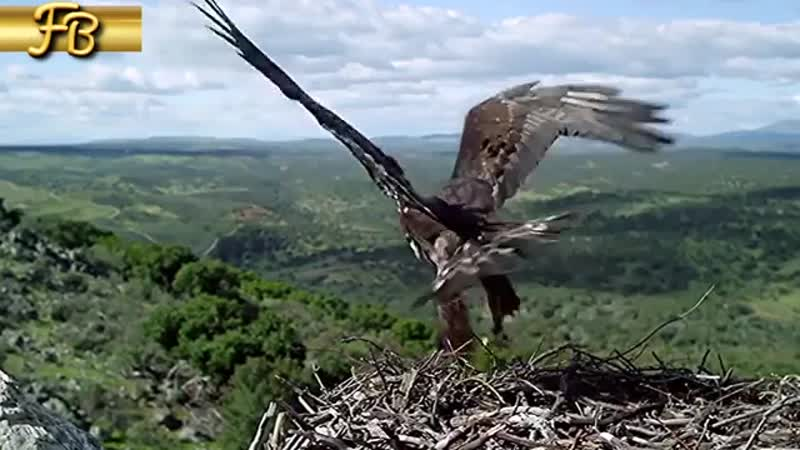 Diass Diva Vocal Cageless Bird