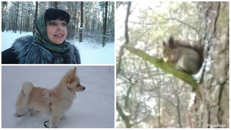 Гуляем в лесу со Шпицем / Сегодня выпало много снега /Попали к Белке на обед