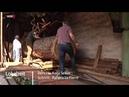 250 Jahre alte Eiche trifft auf Uralt-Sägewerk