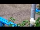 16 07 18 Темижбекская Льёт сильный дождь