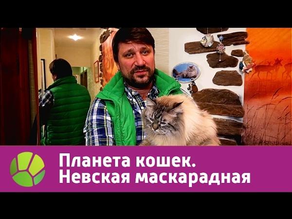 Невская маскарадная Планета кошек Живая Планета