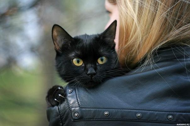 - Люся! Чудовище каждодневное! А ну, подь сюда! Тон голоса хозяйки не внушал доверия, но черный кот, чесавший спину о метлу, все-таки вздыбил шерсть и раздраженно зашипел: - Сама ты Люся, мышь