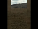 В Башкирии женщина сняла на видео огромное существо, похожее на человека.