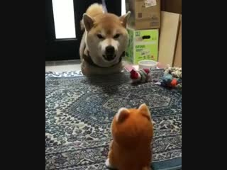 Игрушка повторюшка, собака на нервах. Видео прикол