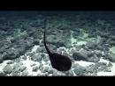Рыба пеликан шокирующая трансформация