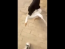 Собака защищает хозяина от безбашеного гуся