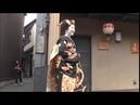 市梅店出し 見世出し japan kyoto kagai kamishichiken maiko