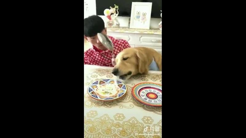 Парень бросил своей собаке вызов в поедании лапши на скорость