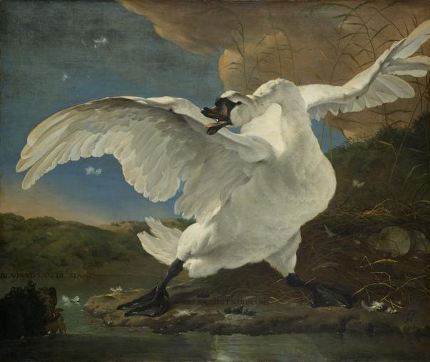 История одного шедевра. «Испуганный лебедь», Ян Асселин