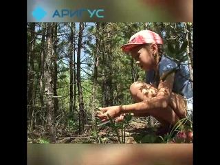 Как находить грибы в Улан-Удэ?