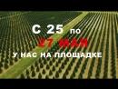 Черная пятница 25 мая 27 мая в питомнике растений Экоплант