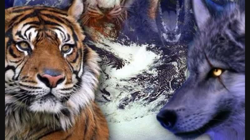 Shere.Khan - Тигр, Пантера, Волк. My Demons