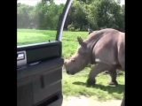 rhino (kiki challenge)