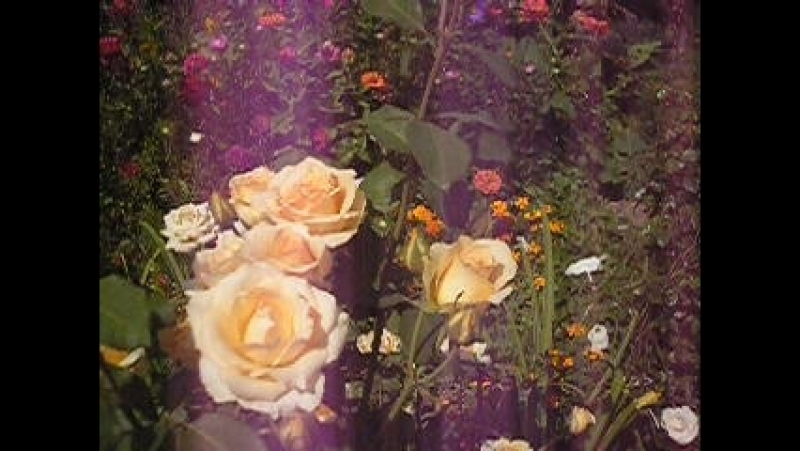 P1010023 Второе цветене Роз
