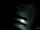 горностай мышкует
