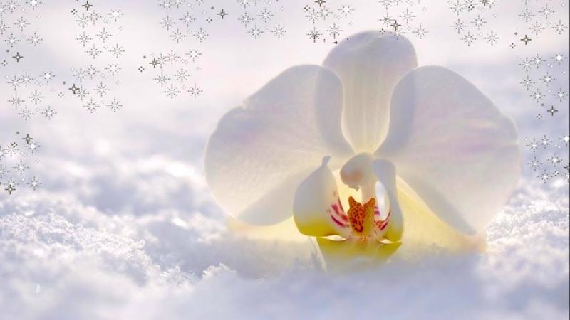 Зимнее Утро Красивое Пожелание Доброе Утро