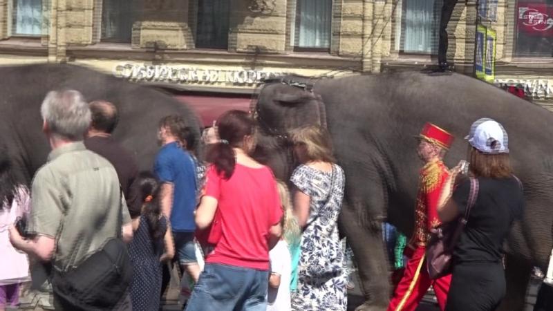 День города. 2018. По улицам слона водили...