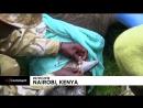 NC Носороги переезжают