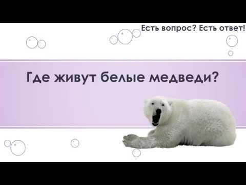 Где живут белые медведи 78