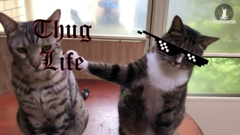 Убойные приколы с животными 8 Fun with cats and animals