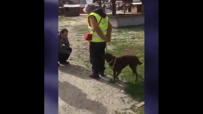 2 года назад эта собака потерялась, но хозяин смог найти её!