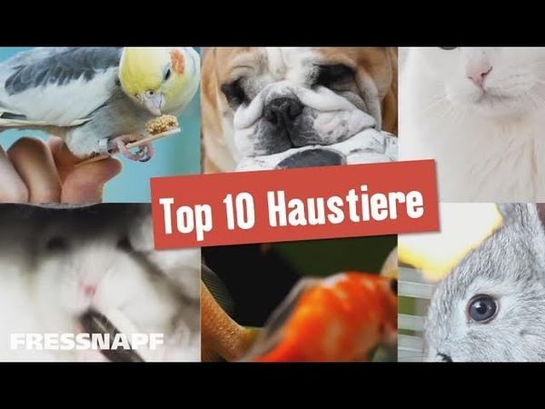 Top 10 Haustiere