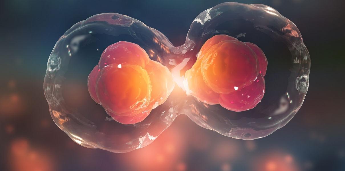 Ученые создали лекарство для удаления из организма престарелых клеток