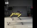 Boston Dynamics научили танцевать свою собаку-Электроника