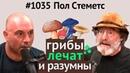 Джо Роган 1035 Пол Стеметс о пользе грибов мистических свойствах разумности кордицепсе и др