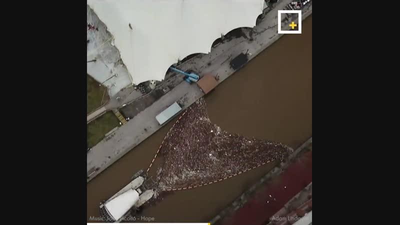 Пожиратель мусора очистил историческую гавань Балтимора