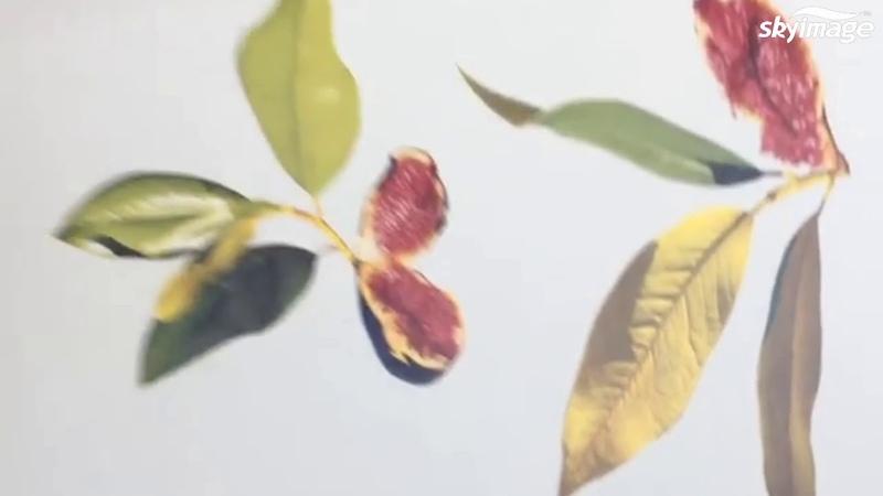 Orginal Epson ink packs for Epson F9380 dye sub prints